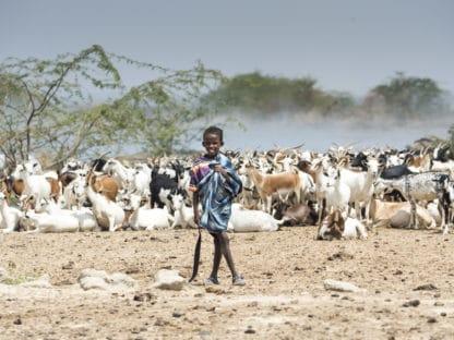 Ein dunkelhäutiger Junge steht vor einer Herde weißer, brauner und schwarzer Ziegen. Im Vordergrund steiniger Boden, im Hintergrund Staub und Bäume. Reisefotografie.